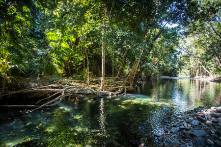 Creek in tropical rainforest, Cape Tribulation, Cairns